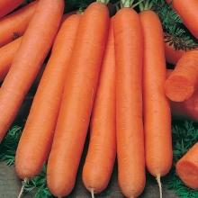 Морковь Длинная тупая без сердцевины - Семена Тут
