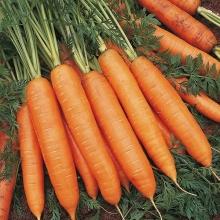 Морковь Детка конфетка - Семена Тут