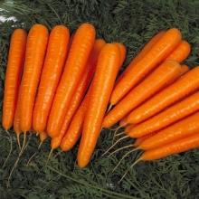 Морковь Долянка (Среднеспелый сорт) - Семена Тут
