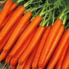 Морковь Карамель Красная - Семена Тут