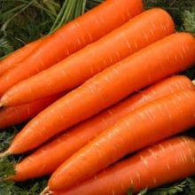 Морковь Карамель Оранжевая - Семена Тут