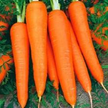 Морковь Карамелька (лента) - Семена Тут