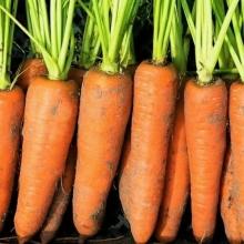 Морковь Корейская Закуска (гелевое драже) - Семена Тут