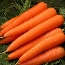 Морковь Королева осени (лента) - Семена Тут