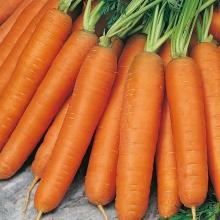 Морковь Лакомка среднеранний - Семена Тут