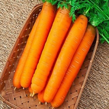Морковь Самсон (лента) - Семена Тут