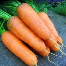 Морковь Шантенэ 2461 (на ленте) - Семена Тут