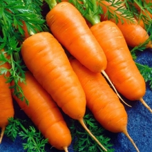 Морковь Шантенэ 2461 (гелевое драже) - Семена Тут