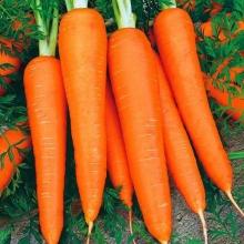 Морковь Вкус детства (на ленте) 8м - Семена Тут
