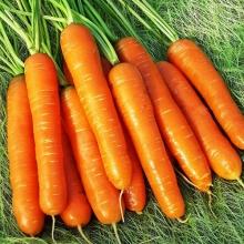 Морковь Зимний нектар - Семена Тут