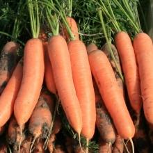 Морковь Зимняя сладкая - Семена Тут