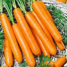 Морковь Нандрин F1 (гелевое драже) (Голландия) - Семена Тут