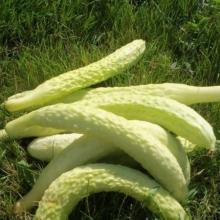 Огурец Белая анаконда F1 - Семена Тут