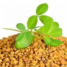 Пажитник сенной Шамбала - Семена Тут