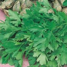 Петрушка листовая Титан - Семена Тут