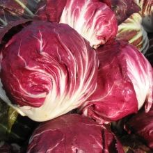 Цикорий салатный Диетический - Семена Тут