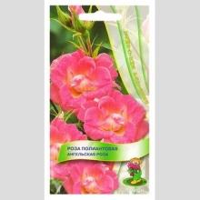 Роза полиантовая Ангельская роза - Семена Тут