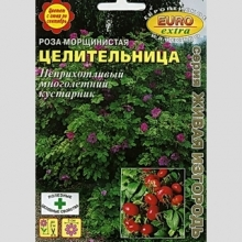 Роза Целительница морщинистая - Семена Тут