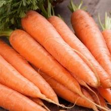 Морковь Сахарный гигант® - Семена Тут