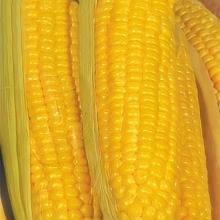 Кукуруза Супер Супер Сладкая F1 - Семена Тут