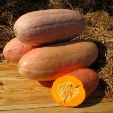 Тыква Розовый банан крупноплодная - Семена Тут