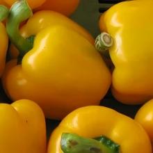 Перец Желтый Витамин - Семена Тут