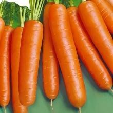 Морковь Зимний цукат (гранулированная) - Семена Тут