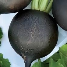 Редька Зимняя круглая черная - Семена Тут